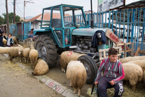 Everyone is busy buying sheep for tomorrows festival.