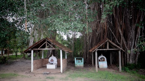Shrines under a Bayam tree.