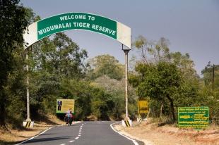 Sheena passing through a tiger park.