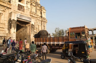 The elephant arrived in the back of a truck.